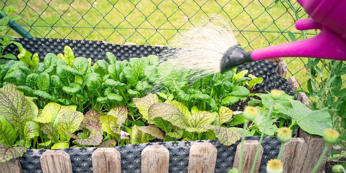 howto garden vegetables for beginners