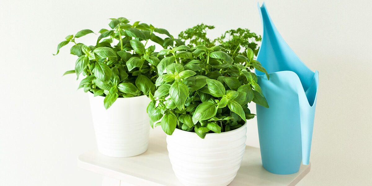 howto grow an herb garden indoors